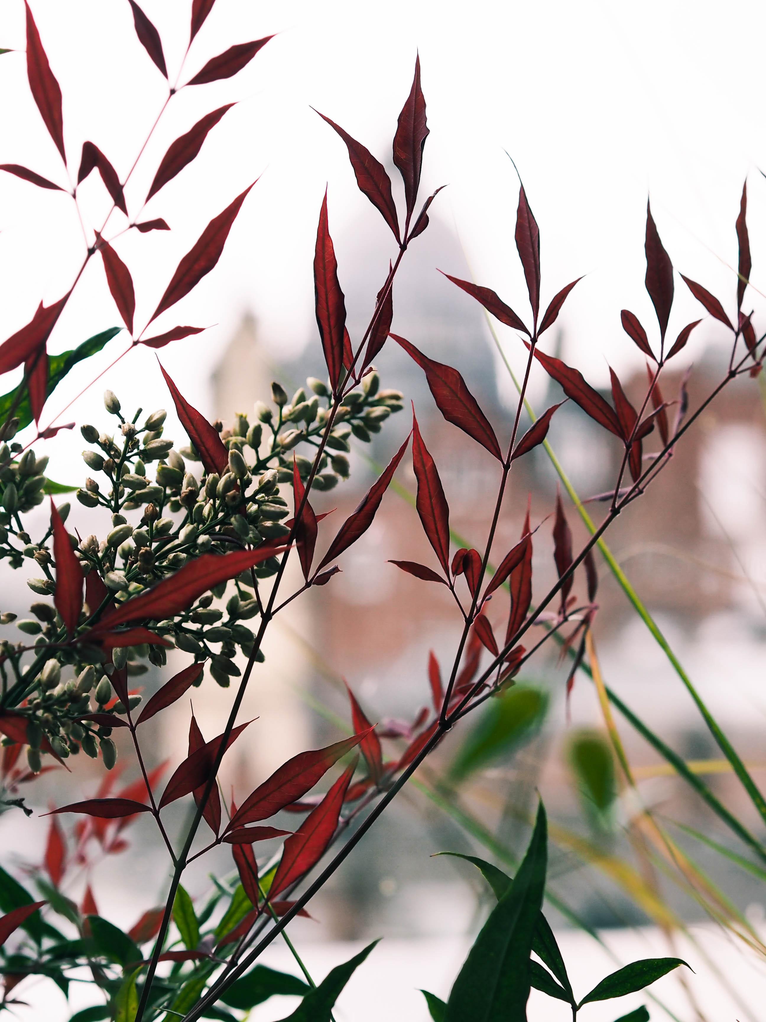 Issho Leeds | rhianna olivia